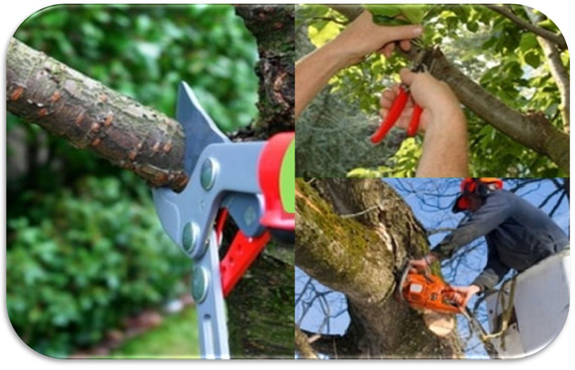 Periodo Migliore Per Potare Quercia quando potare gli alberi | germoglioverde