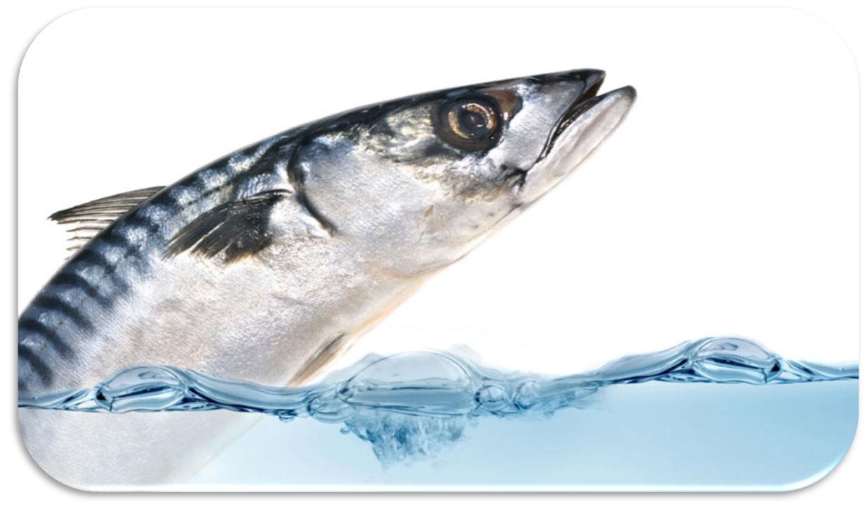 Qualè Il Pesce Azzurro Germoglioverde
