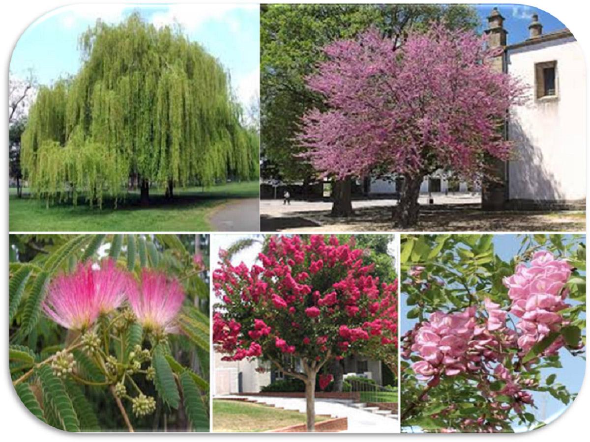 Alberelli Ornamentali Da Giardino cosa È l'arboricoltura ornamentale | germoglioverde
